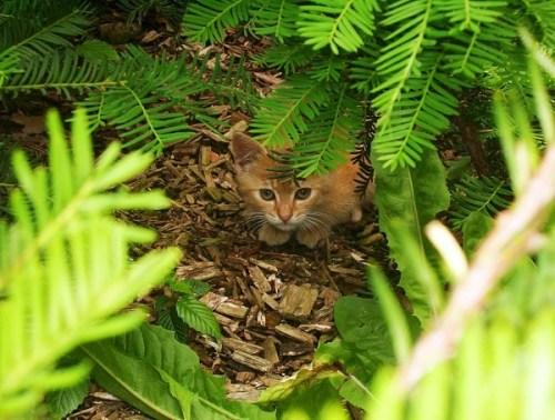 Cat hidden