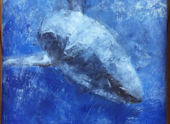 05-requin