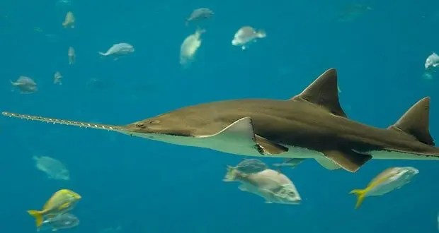 10 Kickass And Cool Shark Species Kickassfactscom