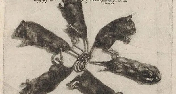 Rats king