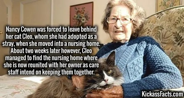 Nancy Cowen was forced to leave behind her cat Cleo, whom she had adopted as a stray, when she moved into a nursing home. About two weeks later however, Cleo managed to find the nursing home where she is now reunited with her owner as care staff intend on keeping them together.