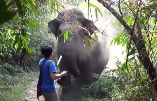 aggressive-elephant