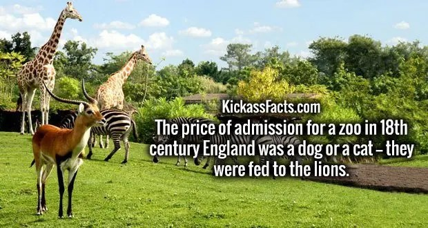 The price of admission for a zoo in 18th century England was a dog or a cat -- they were fed to the lions.