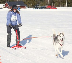 Kickspark traction canine Musher
