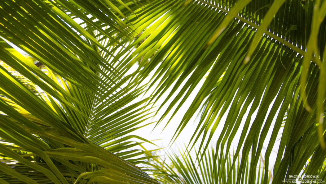 Nintendo Wallpaper Iphone X Tropical Leaves 9 17 2015 Wallpaper Background Kicking