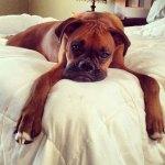 Dogs-of-KiddNation-Bertie-Mae-Jeffnut