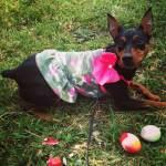 Dogs-of-KiddNation-Khloe-Chanel