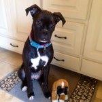 Dogs-of-KiddNation-Lyla