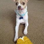 Dogs-of-KiddNation-Milo