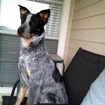 Dogs-of-KiddNation-Wrangler