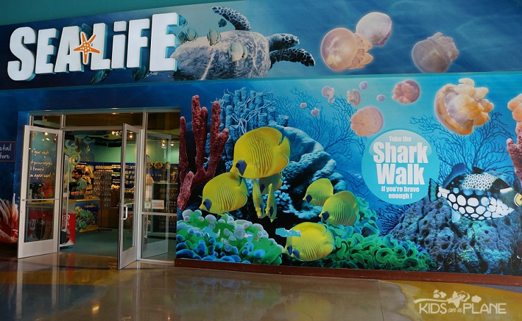 Things To Do With Kids In Grapevine Texas Sea Life