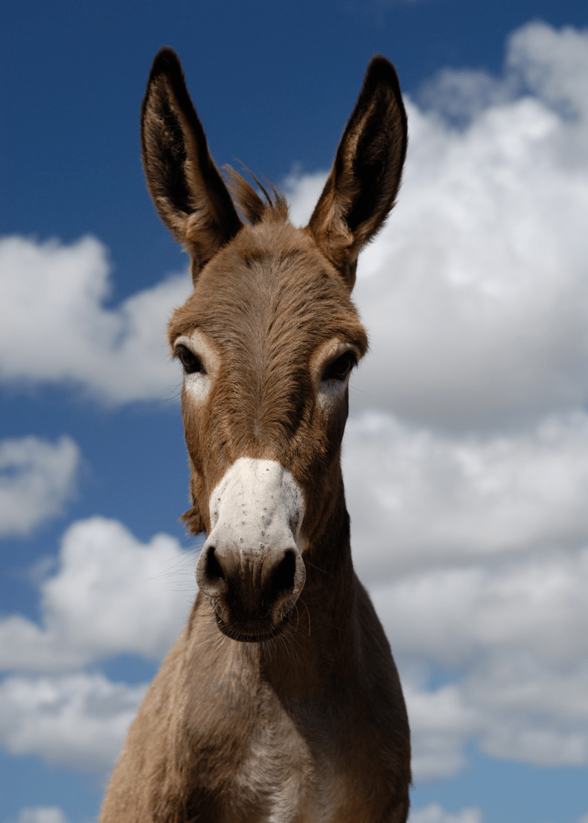 Car Wallpaper 1280x1024 Donkey Pictures Kids Search