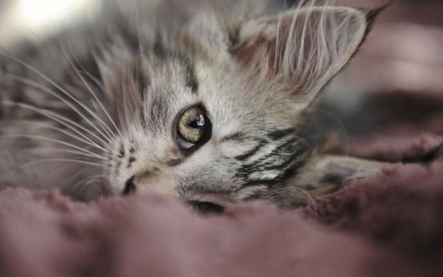 Cute Cat Picture Wallpaper Hd Images De Chats Trop Mignons