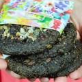 Living cookies