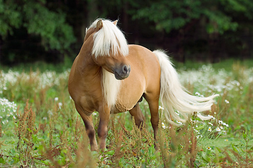 Cute Cartoon Horse Wallpaper Miniature Horse Addition 2048