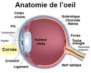 description d'un oeil