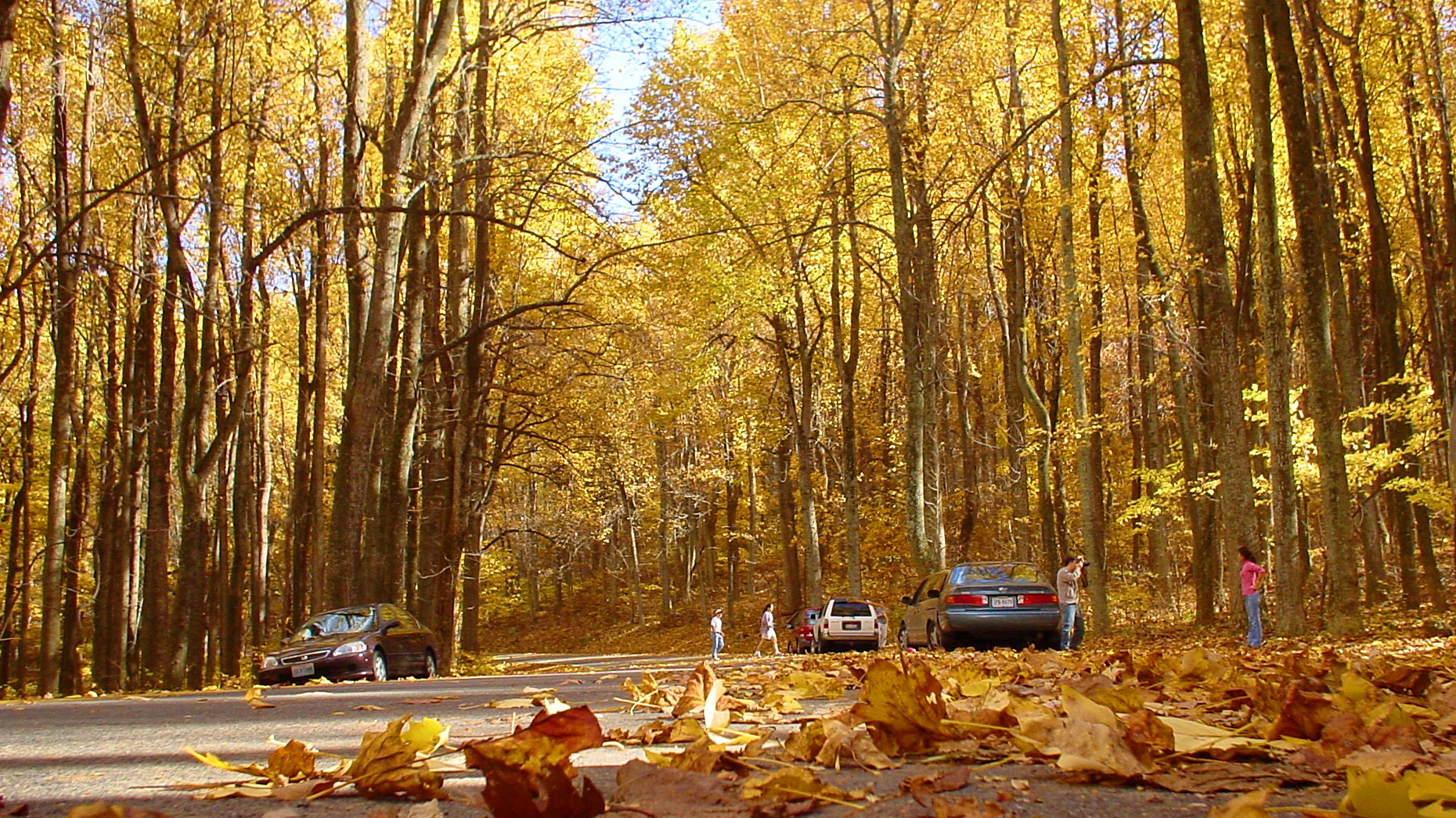 Birch Tree Fall Wallpaper Best Fall Foliage Drives In America Life Is Suite