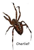 environment_spider