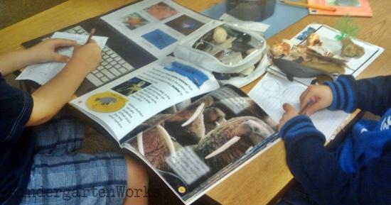 non-fiction literacy center {printable} - KindergartenWorks