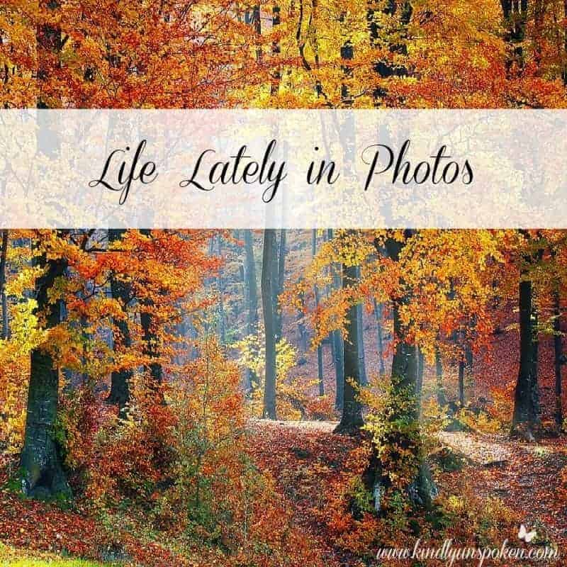 Life Lately in Photos- Fall Update