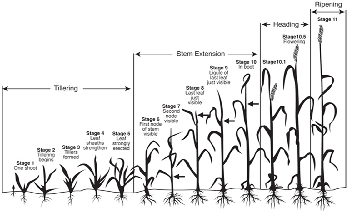 diagram of spring scale