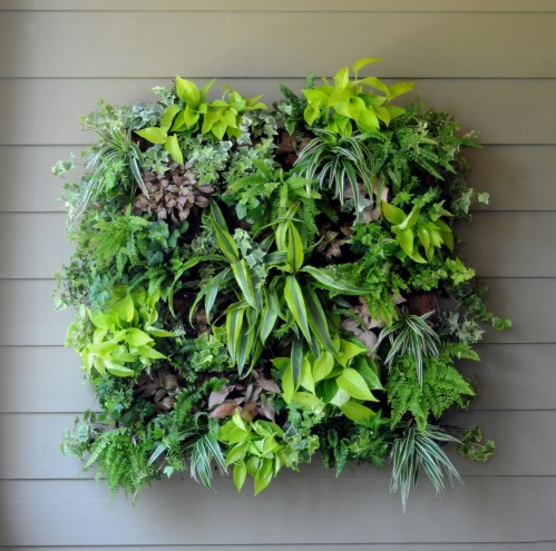 Medium Of Indoor Wall Garden Ideas
