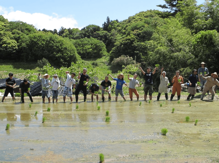 sowing rice in japan
