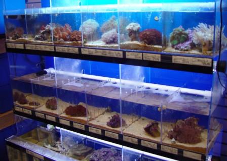 aquarium retailers in pennsylvania
