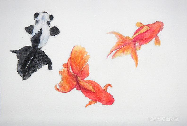 水彩色鉛筆の描き方(金魚)4