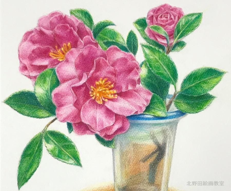色鉛筆画の描き方・椿の花11(部分1)