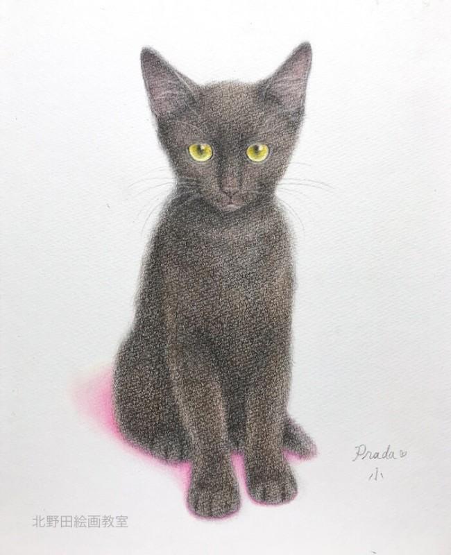 黒猫 プラダちゃん 色鉛筆画 講師