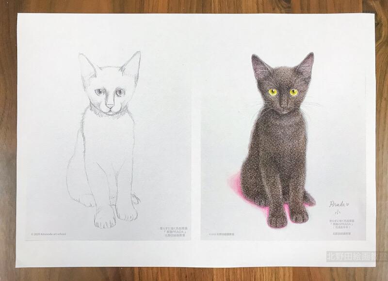 塗らずに描く色鉛筆画 印刷見本 黒猫のPRADA
