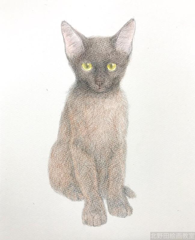塗らずに描く色鉛筆画 講師 黒猫PRADA 5
