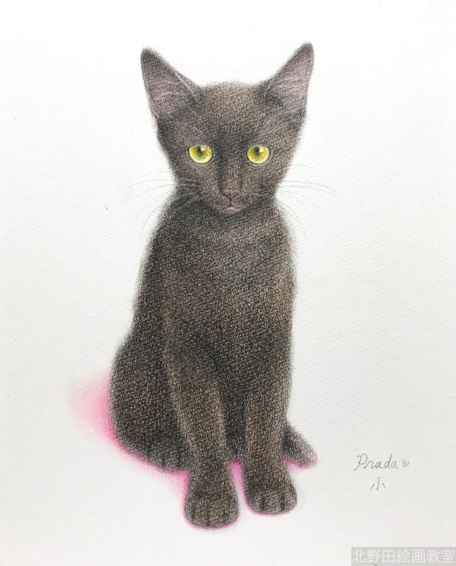 塗らずに描く色鉛筆画 講師 黒猫PRADA