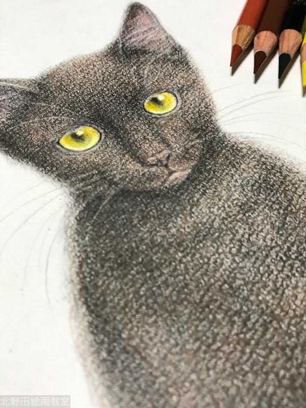 塗らずに描く色鉛筆画 黒猫PRADA 講師