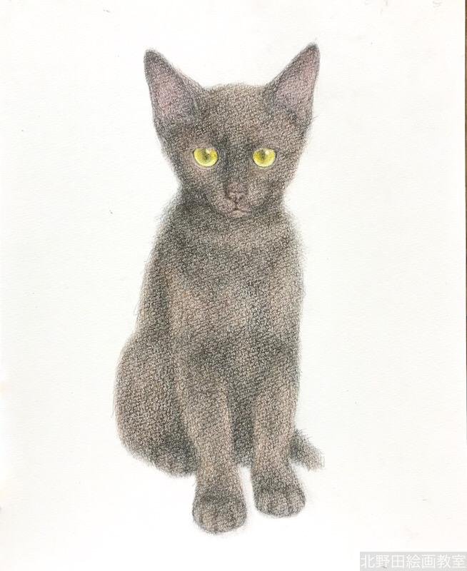 塗らずに描く色鉛筆画 講師 黒猫PRADA 7