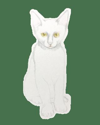 ミニスライダー1 塗らずに描く色鉛筆画 講師 黒猫PRADA