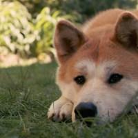 Hachiko – Η ιστορία ενός σκύλου