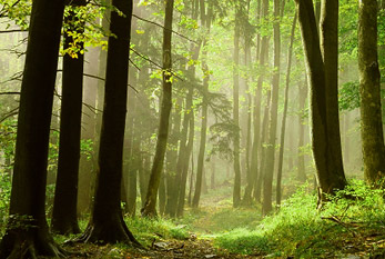 Fall Nature Scenes Wallpaper Internationaler Tag Des Waldes 2019 21 03 2019