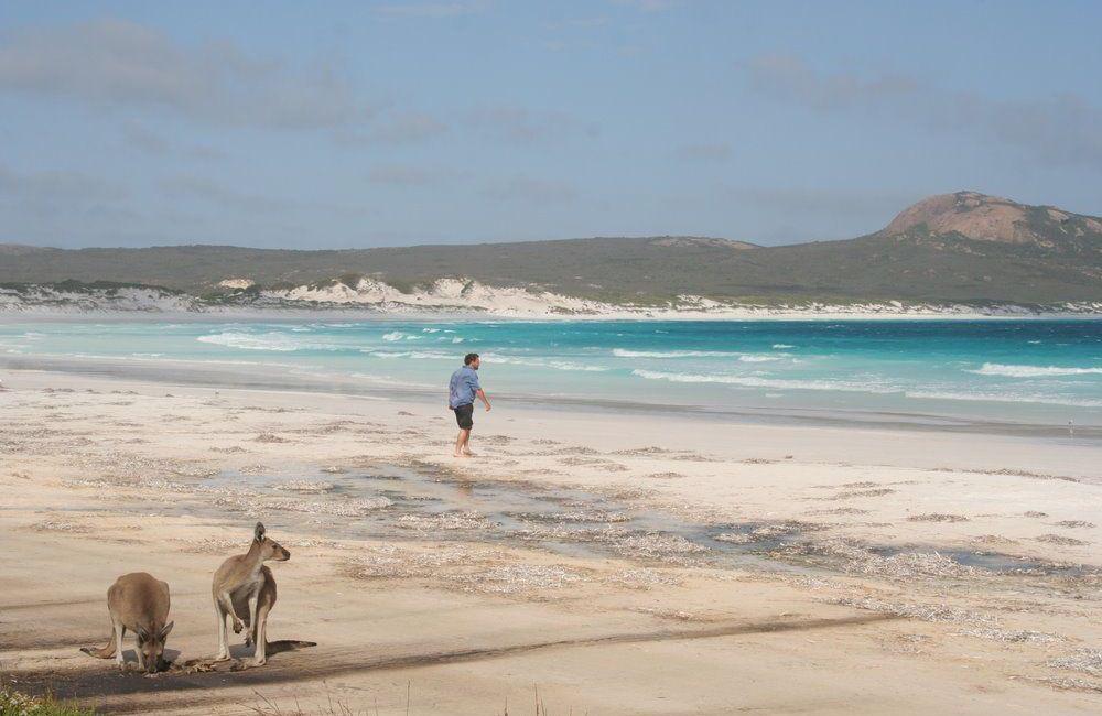 Lucky Bay (Laiminga įlanka) - netoli Esperance - Vakarų Australija