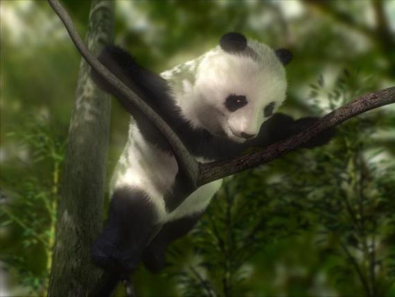 Divertida imagen de oso panda encaramado en un arbol