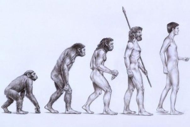 Charles Darwin Natural Selection Theory