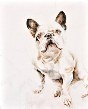 Tristan French Bulldog