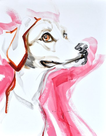 Dog in Pink