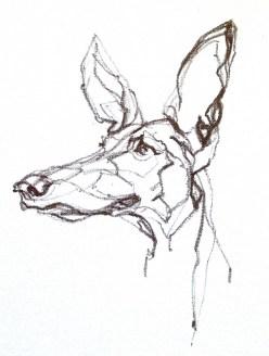 Podenco Dog   print available