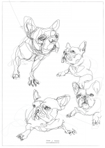 French Bulldogs   print available
