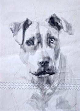 Dog on sail 02