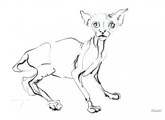 Cat 17-2