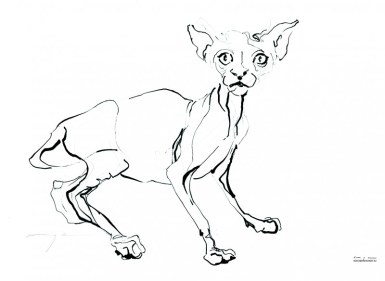 Cat 17-2 | Ink drawing on paper | A3 | 175€