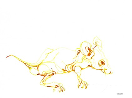 Yellow Mouse | Ink drawing on paper | A3 | 175€